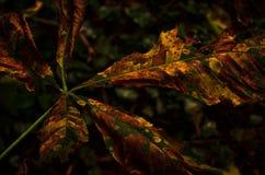 Tarnungsblatt im Wald Stockbild