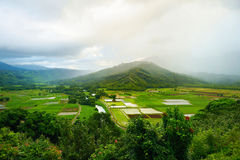 Taro τομείς στην όμορφη κοιλάδα Hanalei Στοκ Φωτογραφία