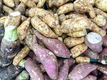 Taro and Cassava Roots Royalty Free Stock Photos