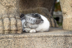 Taro cat of Sumiyoshi Taisha Shrine, Osaka royalty free stock photography