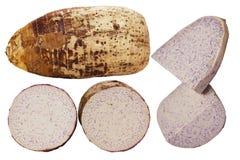 Taro Colocasia Esculenta Arkivbild