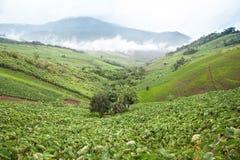 Taro field on mountain. The Taro field on mountain Royalty Free Stock Images