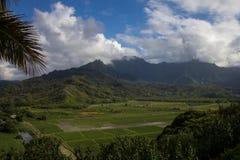 Taro Fields dans Kauai, Hawaï Photographie stock