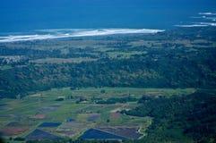 Taro Fields di Kauai Immagini Stock