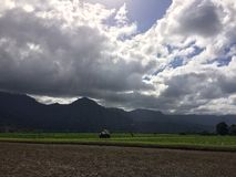 Taro Fields in Hanalei Valley on Kauai Island, Hawaii. royalty free stock images