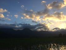 Taro Fields in Hanalei Valley on Kauai Island, Hawaii during Sunset. Royalty Free Stock Image