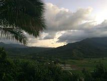 Taro Fields in Hanalei Valley on Kauai Island, Hawaii during Sunset. Stock Photos