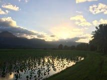 Taro Fields in Hanalei Valley on Kauai Island, Hawaii during Sunset. Stock Photography