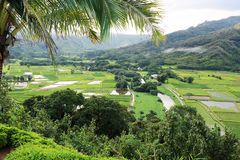 Taro Fields in Hanalei Valley Royalty Free Stock Photo