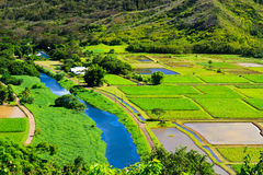 Taro fields in Kauai Royalty Free Stock Photos
