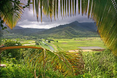 Taro Fields in Kauai Stock Image