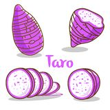 Taro isolated on white background vector illustration