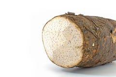 Taro korzenie Obraz Stock