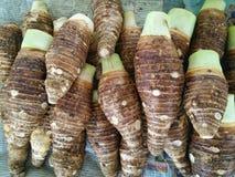 Taro korzenie Zdjęcie Stock