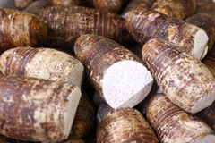 Taro root Royalty Free Stock Photo