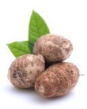 Taro root stock photo