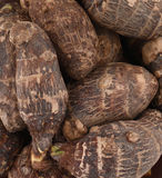 Taro root. Background of fresh taro root colocasia Stock Photos