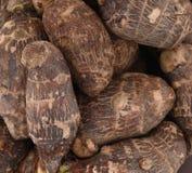 Taro root. Background of fresh taro root colocasia Stock Image