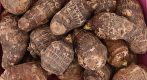 Taro root. Background of fresh taro root colocasia Royalty Free Stock Image