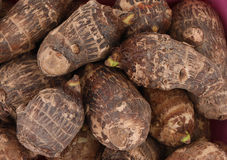 Taro root. Background of fresh taro root colocasia Royalty Free Stock Photos