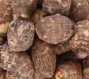 Taro root. Background of fresh taro root colocasia Stock Photography