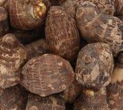 Taro root. Background of fresh taro root colocasia Royalty Free Stock Photo