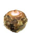 Taro Root Vegetable Royalty Free Stock Image