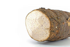 Taro roots Stock Image