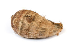 Taro roots. Stock Images
