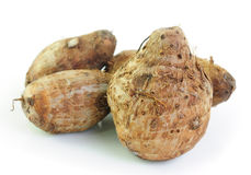 taro roots  on white background Royalty Free Stock Images