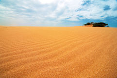 Taroa Sand Dune. A shrub appearing from the Taroa Sand Dune in Guajira, Colombia Stock Images