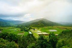 Tarofält i den härliga Hanalei dalen Arkivbild