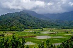 Tarofält, moln, kauai, hawaii Arkivbilder