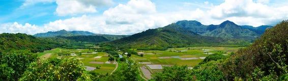 Tarofält på Kauai Hawaii Royaltyfri Fotografi