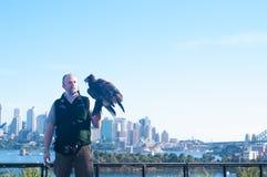 Tarongadierentuin Sydney Stock Afbeelding