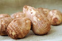 Taros root Royalty Free Stock Image