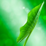 Tarosidor på den gröna bokehen Arkivfoton