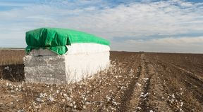 Fresh Bail Harvest Cotton Farm Field Texas Agriculture Stock Photography