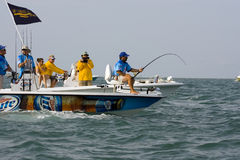 A tarpon hooked up and fighting. A tarpon is hooked up and is giving a good fight Stock Image