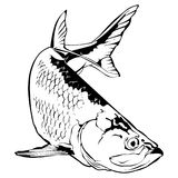 Tarpon-Illustration Lizenzfreies Stockbild