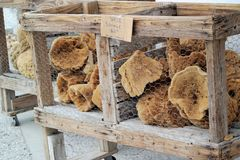 Tarpon Springs Sponges royalty free stock image