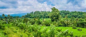 Tarrace риса и превосходные зеленые джунгли в Sidemen bali Индонесия стоковое изображение
