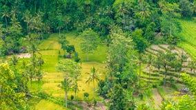 Tarrace del riso e piccolo villaggio in Sidemen, Bali, Indonesia Immagini Stock