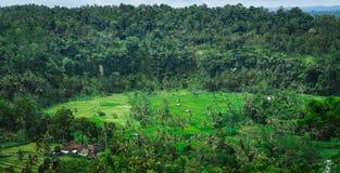 Tarraces de riz et quelques huttes entre, accompagnateur, Bali, Indonésie Photos libres de droits