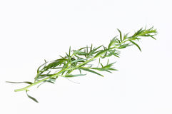Tarragon Royalty Free Stock Images