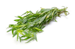 Tarragon. Cooking ingredient series tarragon. available for clipping work royalty free stock image