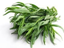 Tarragon Stock Images
