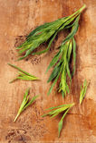 Tarragon. (Artemisia dracunculus) on wooden cutting board royalty free stock photos