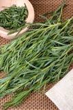Tarragon (Artemisa dracunculus) Royalty Free Stock Image