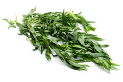 Tarragon close up Stock Photo
